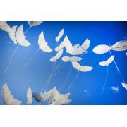 Шары голуби с гелием (биоголуби) - дополнительное фото #2
